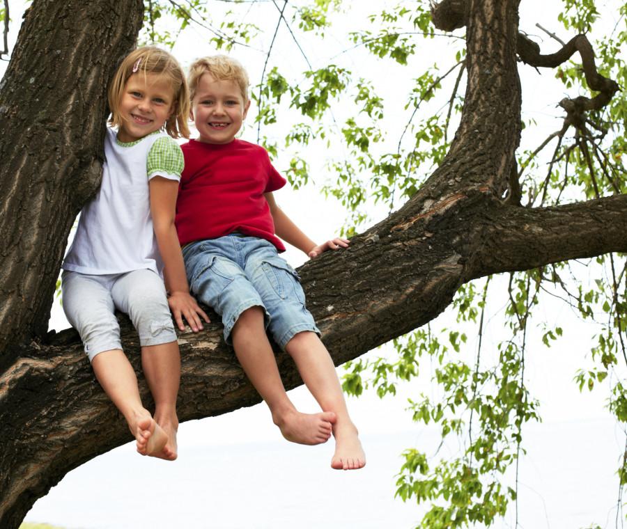 la-scuola-dove-ci-si-puo-arrampicare-sugli-alberi