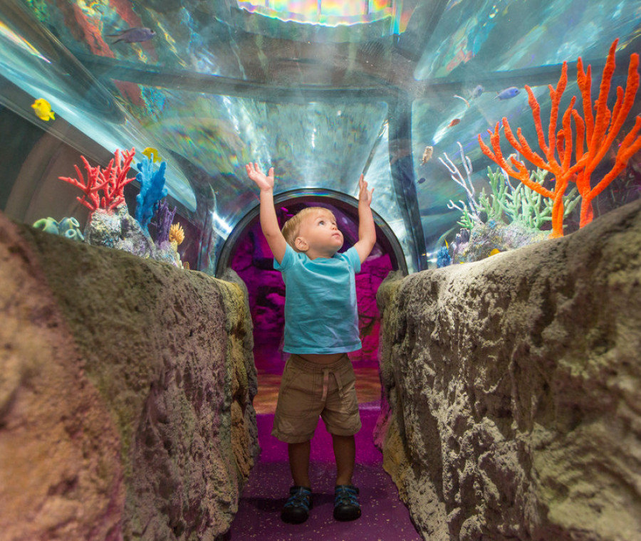 sea-life-acquarium-roma-un-concorso-dedicato-ai-piccoli-amanti-del-mare