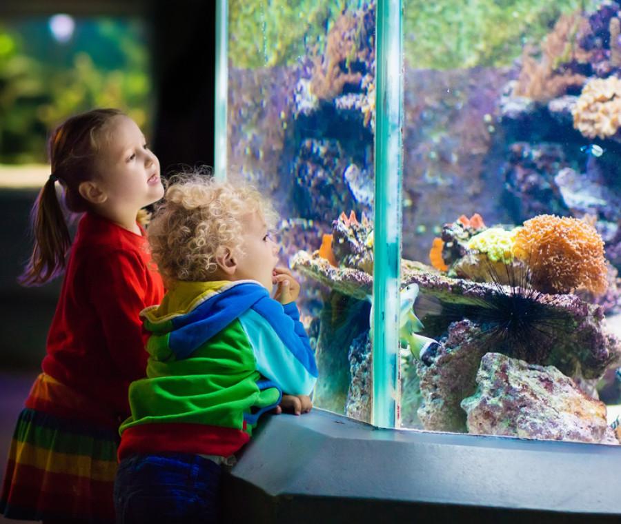 gita-all-acquario-di-genova-divertimento-ogni-giorno-dell-anno