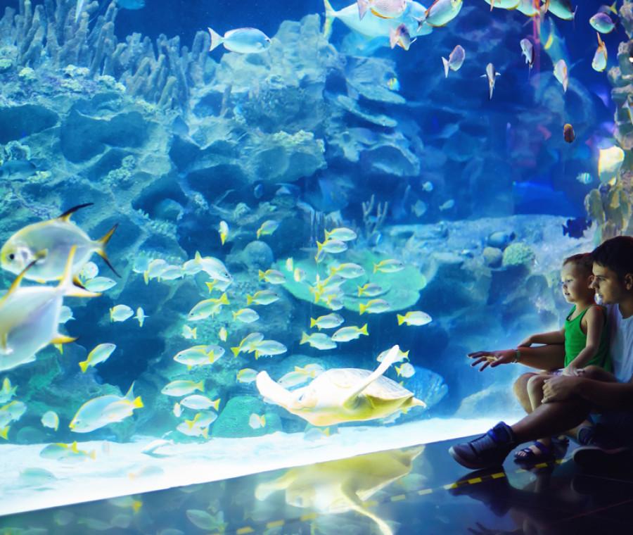 la-guida-agli-acquari-piu-belli-in-italia-per-i-bambini