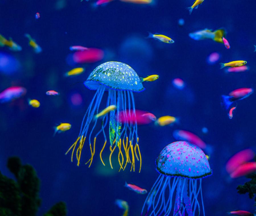 invasione-di-meduse-nei-nostri-mari-rimedi-e-precauzioni