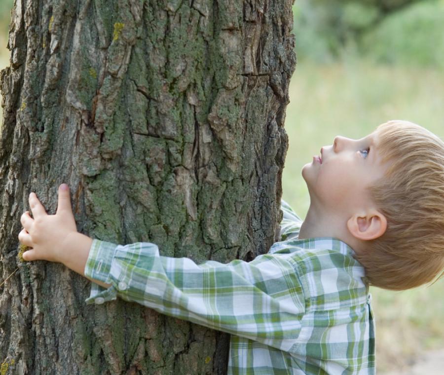 curarsi-con-gli-alberi