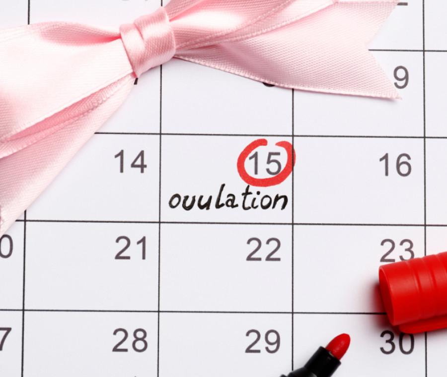 giorni-fertili-come-individuarli-e-come-aumentare-le-possibilita-di-concepimento