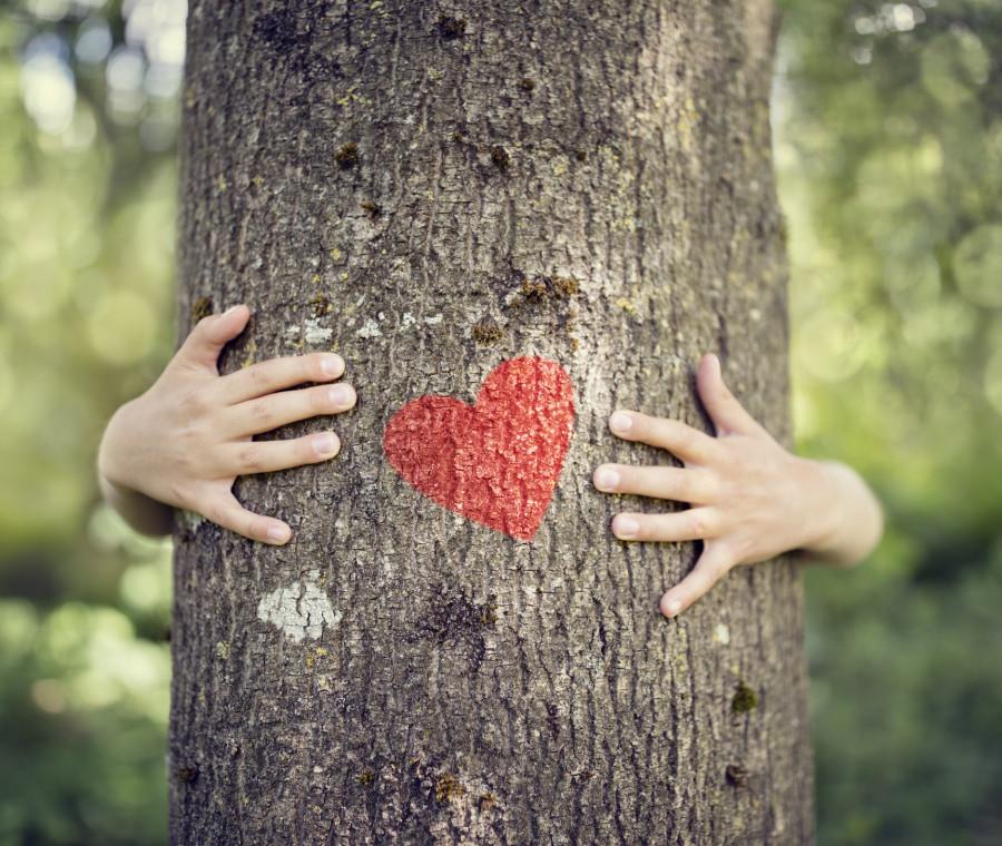 i-cerchi-dell-albero-come-raccontare-la-morte-ai-bambini