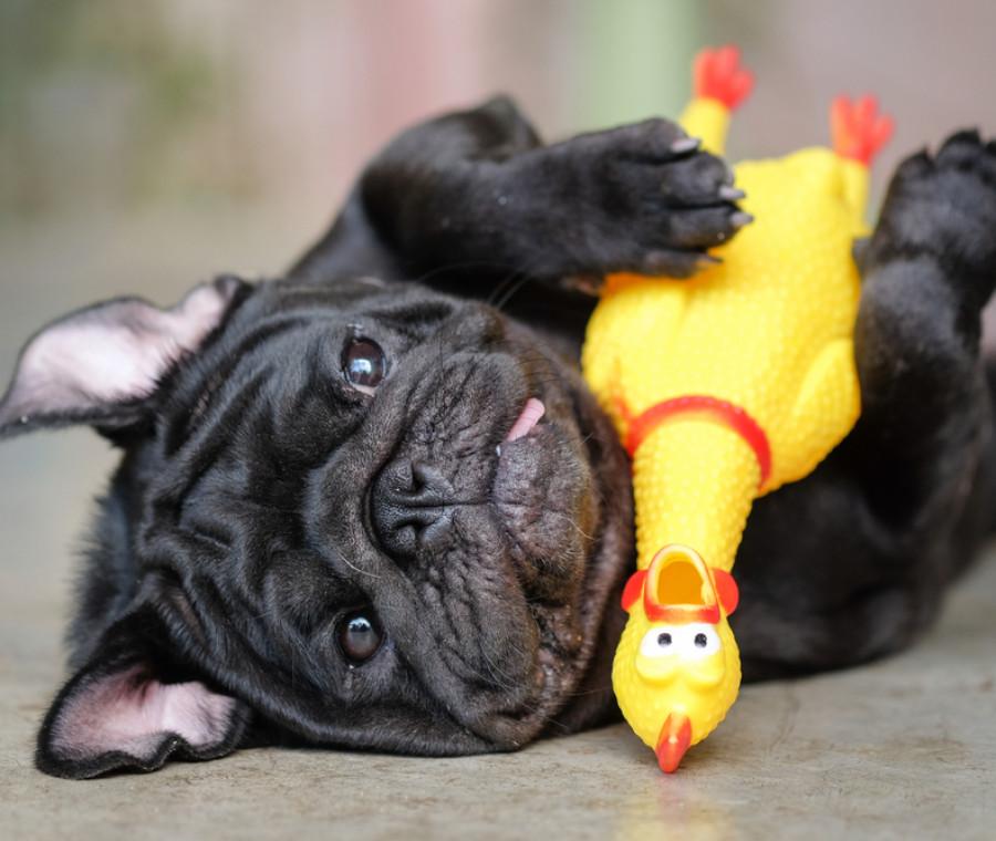 giochi-per-cani-tante-idee-per-far-divertire-i-nostri-amici-a-4-zampe