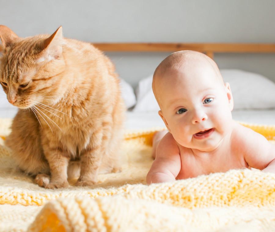 neonati-e-gatti