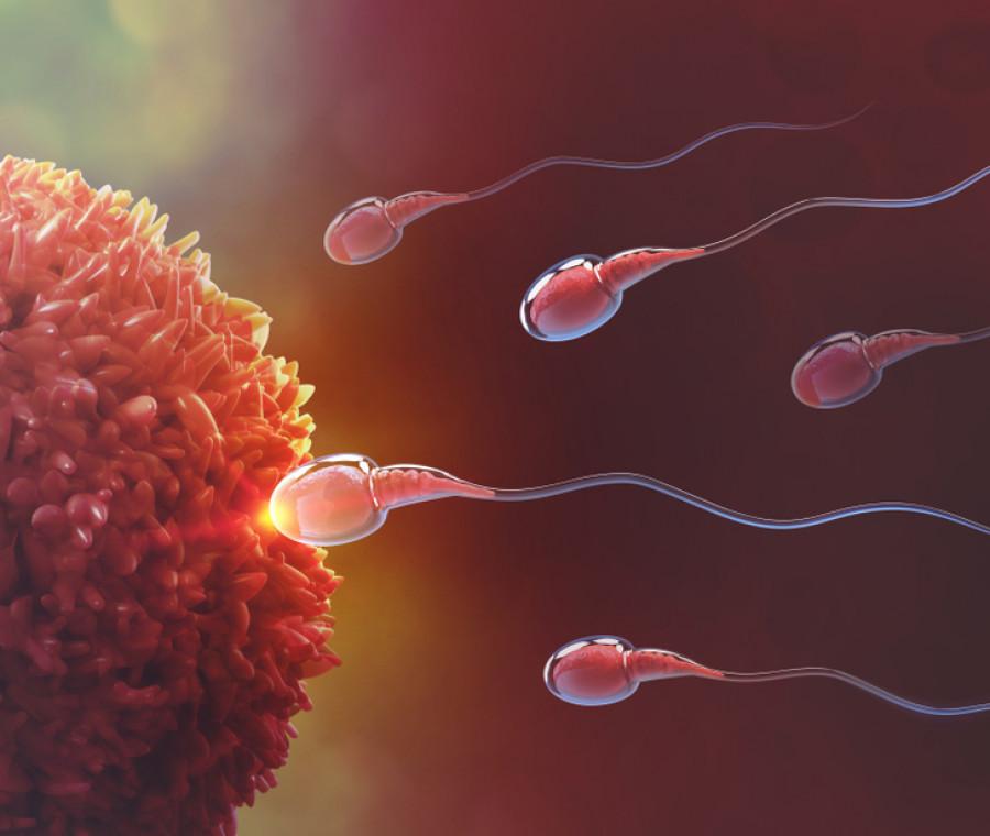 quanto-vivono-gli-spermatozoi