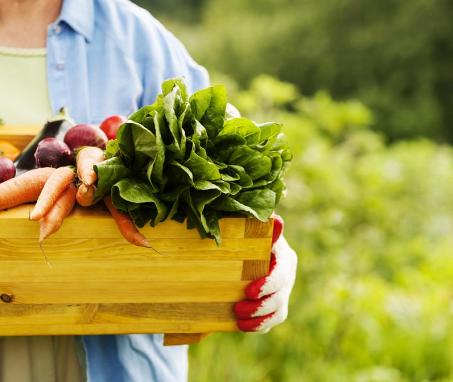 alimenti-bio