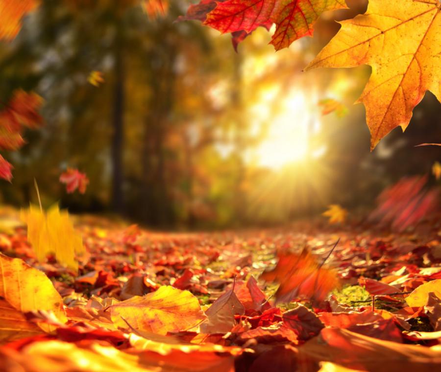 foliage-dove-vederlo