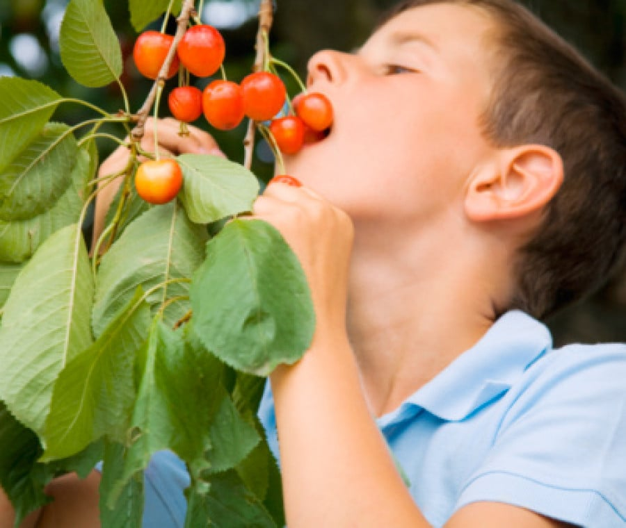 Ciliege o frutti di bosco