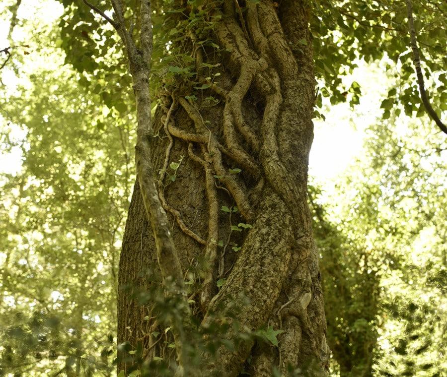 Albero nel bosco