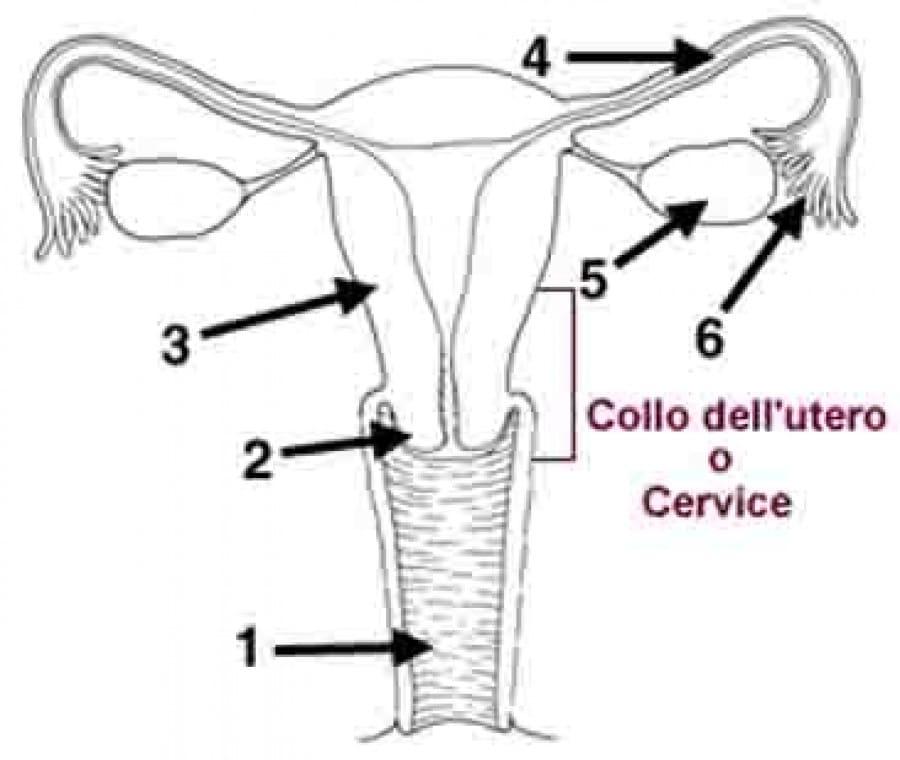 genitali-femminili_1