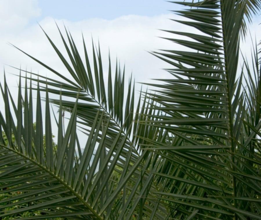 Si comincia con la Domenica delle Palme...